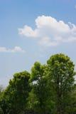 Treetop Στοκ Φωτογραφίες
