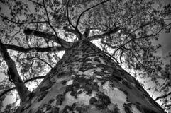 Treetop Στοκ εικόνα με δικαίωμα ελεύθερης χρήσης