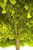 treetop Obraz Royalty Free