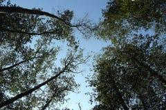 treetop Imágenes de archivo libres de regalías