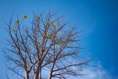 treetop Foto de archivo