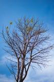 treetop Fotos de archivo libres de regalías
