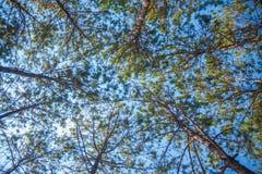 treetop Stock Foto