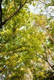 Treetop Arkivfoto