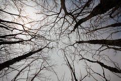 Treetop Стоковые Изображения