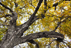 Treetop Royalty-vrije Stock Afbeeldingen