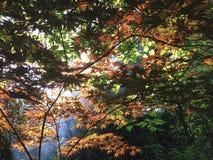 Treetop Arkivbild