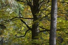 Treetop royaltyfria foton