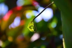 treetop Foto de Stock