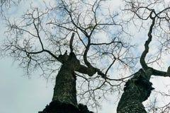 Treetop Στοκ Φωτογραφία