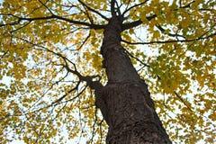treetop Fotografia de Stock