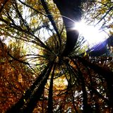 Treetop Στοκ εικόνες με δικαίωμα ελεύθερης χρήσης