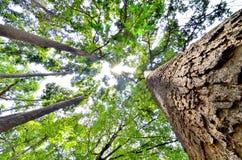 treetop Photographie stock libre de droits
