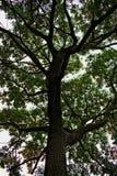 Treetop Стоковые Фотографии RF