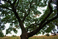 Treetop Стоковая Фотография RF