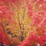 Treetop Στοκ Εικόνες
