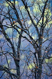 Treetop abstraction dry leaves Stock Photos
