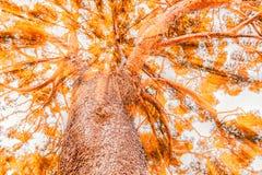 Treetop on the autumn Stock Photos