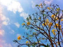 Treetop. Branch stick flowering floweringtrees Stock Images