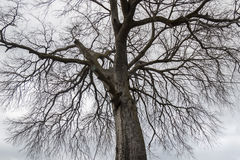 Treetop branches of a leafless tree in winter Stock Photography