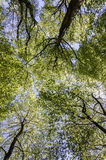 Treetop Canopy Background Stock Photography