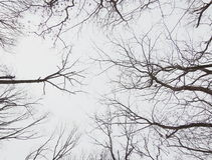 Treetop Royalty Free Stock Image