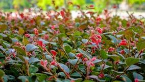Treetop czerwonego koloru młodzi kwiaty Zdjęcie Royalty Free