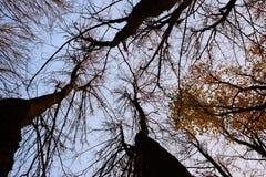 Treetop in de herfst Royalty-vrije Stock Foto's