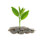 Treetop in growth on coins stack. Royalty Free Stock Photography