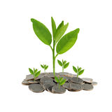 Treetop in growth on coins stack. Stock Image
