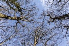 Treetop im Winterwald Lizenzfreies Stockbild
