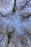 Treetop im Winterwald Stockbilder