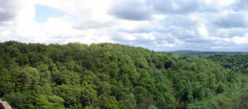 Treetop-Landschaft Lizenzfreie Stockfotos