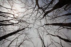 Treetop Stock Images