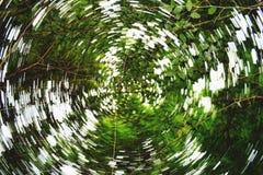 Treetop luchtspiegeling Royalty-vrije Stock Afbeelding