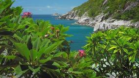 Treetop met de bloem van de plumeriabloesem voor Tanote-Baai Smaragdgroen oceaanwater, mooie Coral Reef en reusachtig stock videobeelden