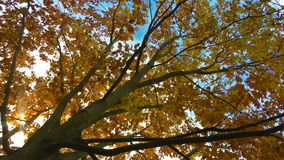 Treetop with moving leaves stock video footage