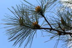 Treetop-Nahaufnahme Stockbild
