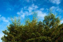 Treetop niebo Zdjęcia Royalty Free
