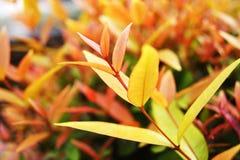 Treetop pączkuje czerwonych liście Obrazy Stock