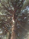 Treetop som underifrån beskådas royaltyfria foton