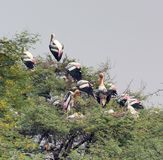 Treetop and storks Royalty Free Stock Images