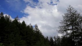 Treetop Timelapse. A timelapse video of pine treetops in the English Lake District National Park stock video