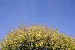 Treetop und Himmel Lizenzfreies Stockfoto