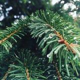 Treetop van de pijnboom (lucht) 2778 Royalty-vrije Stock Afbeeldingen
