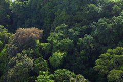 Treetop view of dense forest Stock Photos