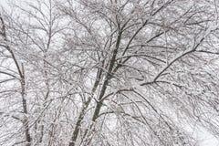 Treetop von Baumasten ohne die Blätter bedeckt mit Eis und Frost auf dem nebelhaften oder Wintertagesnaturhintergrund des Fogy ka lizenzfreie stockbilder