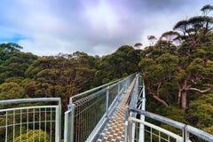 Treetop walk, Australia Stock Image