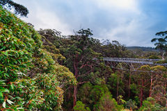 Treetop walk, Australia Stock Images