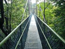 Treetop walk Royalty Free Stock Photography